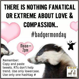 Badgermonday May 14
