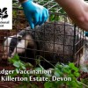 National Trust Badger Vaccination Programme