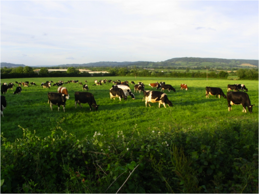 50% of nests were eaten or trampled by cows  © Tim Hounsome
