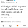 Pilot badger culls fail on two major counts