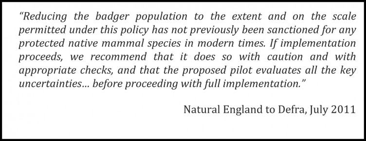 NE-to-Defra-on-Badger-Cull
