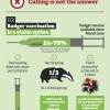 Wildlife Trusts badger cull infographic